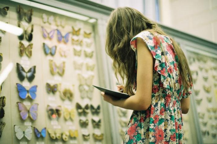 http://elenita.no/img/2010/may/butterflies.jpg